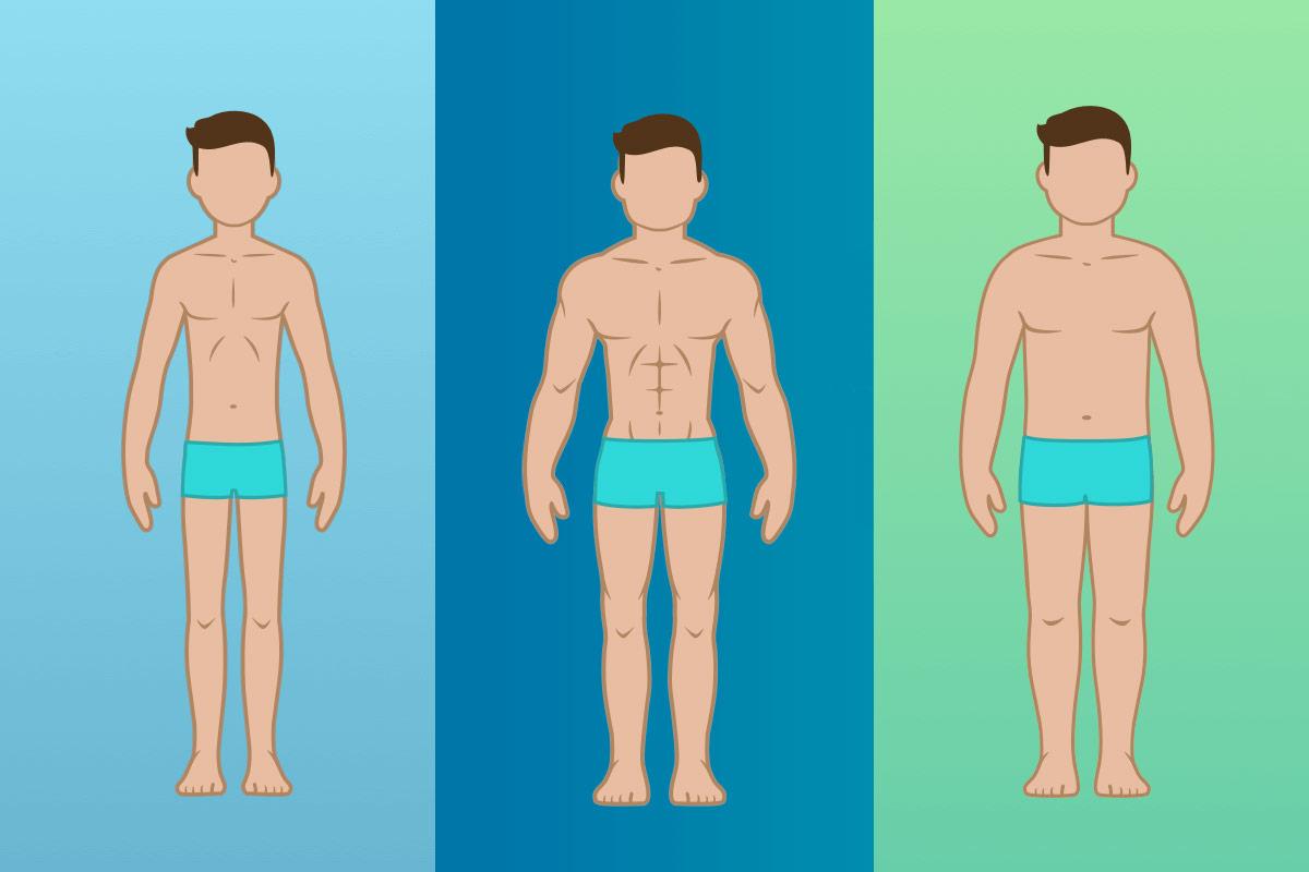 📌Типы телосложения - сводная таблица видов. Как определить свой?